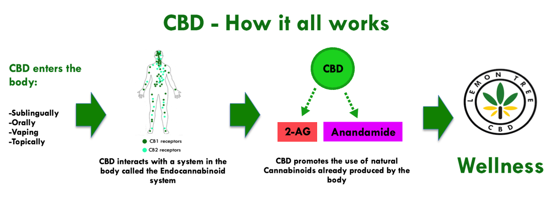 CBD - How it all works